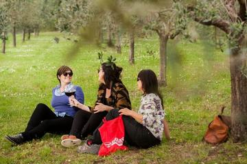 Small Group Wines and Vines of Verona Tour Including Wine Tasting and...