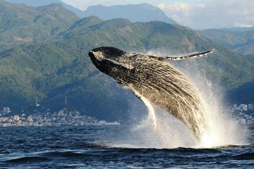 WHALE WATCHING ECOTOURS