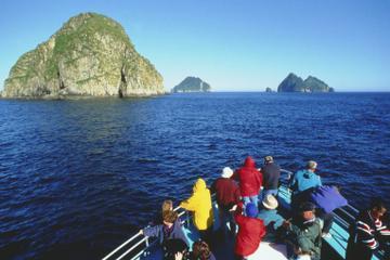 Seward Shore Excursion: Resurrection Bay Cruise