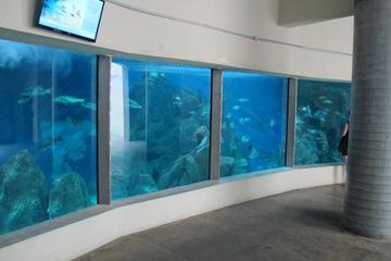 Entrébillet til Paranagua-akvarium