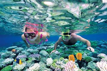 Plongée avec masque et tuba sur l'île Catalina au départ de Punta Cana