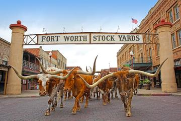 Day Trip Stockyards Cattle Drive Electric Bike Tour near Fort Worth, Texas