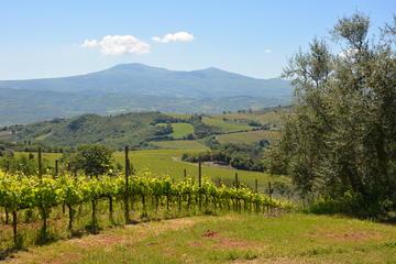 Montalcino food & wine tour