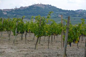 Montepulciano food & wine tour