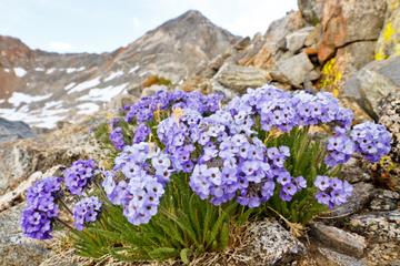 Tour privado: caminata por Yosemite con guía naturalista