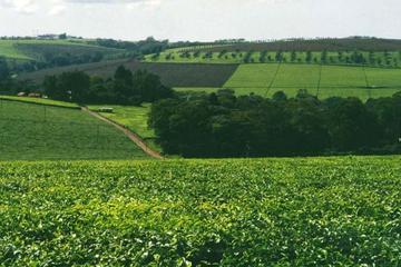 DAY TOUR TO KIAMBETHU TEA FARM IN LIMURU