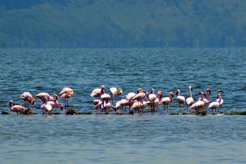 DAY TOUR TO LAKE NAKURU NATIONALPARK WITH OPTIONAL BOAT RIDE ON LAKE NAIVASHA