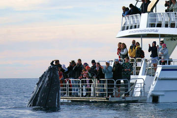 Crucero de avistamiento de ballenas en Hervey Bay