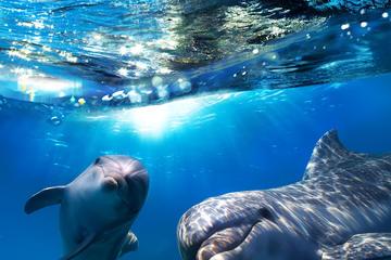 Cruzeiro para ver golfinhos por Gibraltar com transporte saindo de e...