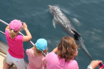 First Class Sailing in Gibraltar with Dolphin Safari