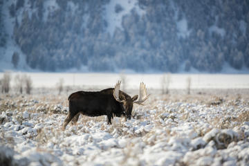 Grand Teton and National Elk Refuge...