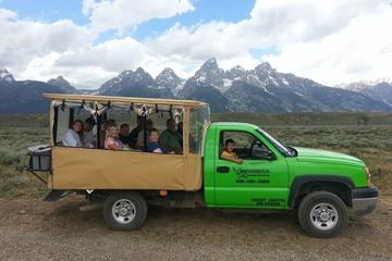 Grand Teton Wildlife Safari in Open-Air Vehicle