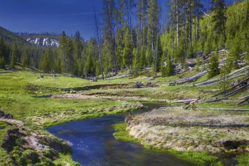 excursion-au-parc-national-a-yellowstone