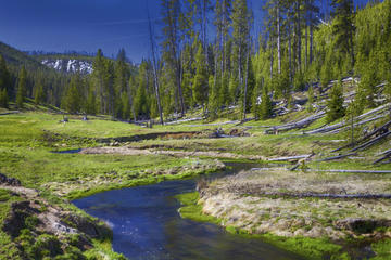 Yellowstone Old Faithful Wildlife Safari by Jeep