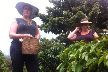 Day Tour to Medellín, Countryside and Coffee Regio