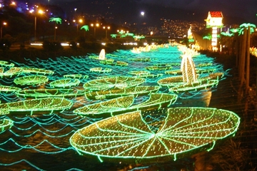 Excursão de luzes de Natal em Medellín
