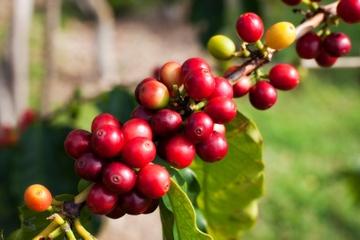 Excursión de un día a Jardín: Visita turística y recorrido del café...