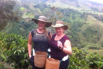 Medellin City and Coffee Region Tour