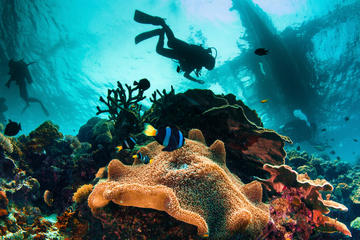Try and Discover scuba diving