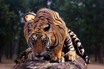 6N & 7D Incredible Madhya Pradesh...