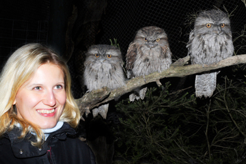 Visita nocturna al Moonlit Sanctuary Wildlife Conservation Park