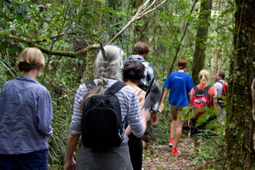 Puketi Regenwald-Spaziergänge
