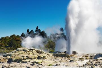 Excursão terrestre por Tauranga: destaques de Rotorua