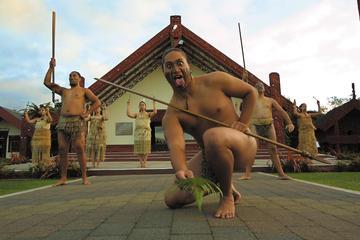 Landausflug in Tauranga: Kulturzentrum Te Puia Maori und...