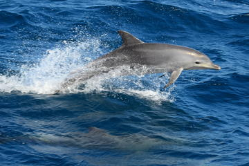 Dolphin and Marine Discovery Lunch Cruise