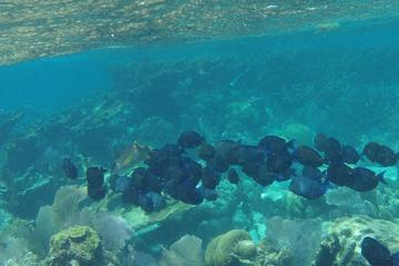 Coral Garden Shark and Sting Ray Alley Snorkeling