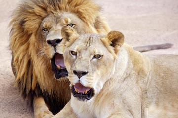 Lion Habitat Ranch: entrada general con visita privada entre...