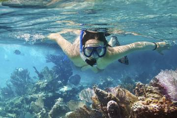 Sortie de plongée libre à Cozumel...
