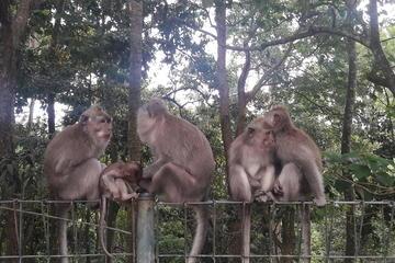 Family day trip to ubud
