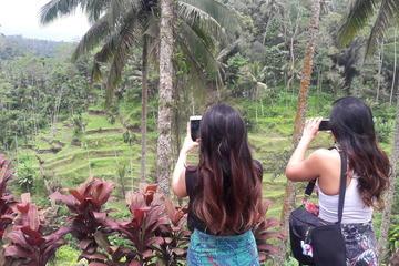 Full day  tour Jatiluwih Unesco heritage Ulun Danu Bratan and Tanah Lot Temple