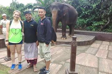 Morning Breakfast With Orangutans at Bali Zoo Park included hotel transfer