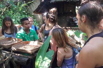 Ubud Rice Terrace Tour