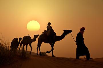 Paseo en camello al atardecer en el...