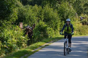 Coastal Fat-Tire Biking Tour in...