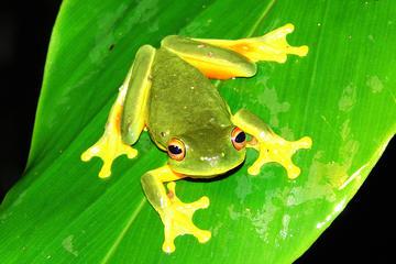Tour nocturno por la fauna y flora de la selva tropical de la Meseta...
