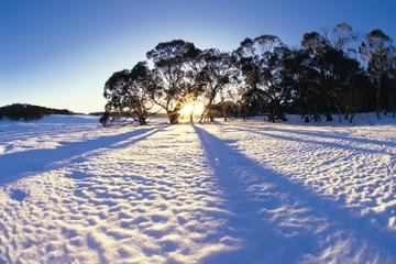 Excursion d'une journée à la neige à Lake Mountain et aux chutes de...