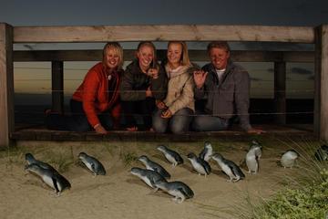 Excursion d'une journée à Phillip Island pour rencontrer les...