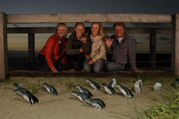 Phillip Island Day Trip with Penguin...