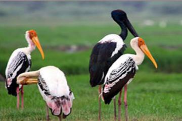 Explore The Keoladeo Ghana National Park with Fatehpur Sikri