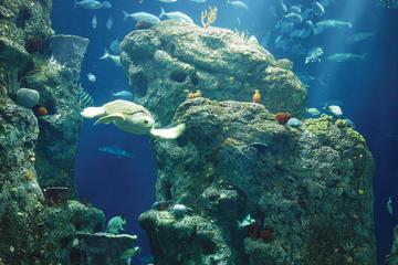 Eintritt in South Carolina Aquarium