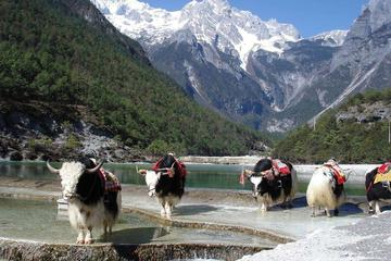 Private Day Trip to Yak Meadow at Jade Dragon Snow Mountain and Shuhe Ancient Town from Lijiang