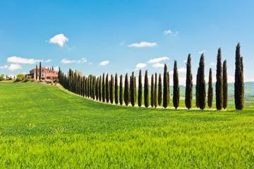 Besuch einer toskanischen Luxus-Villa mit Mittagessen und Weinprobe