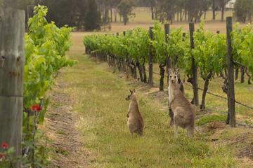 Hunter Valley Wine Tasting Private ...