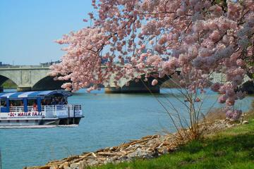 Cherry Blossom and Monuments Cruise in Washington DC