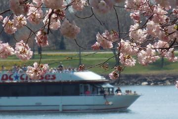 Crucero para observar los monumentos y los cerezos en flor en...