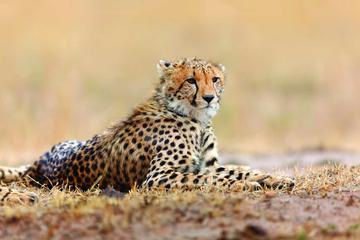 4-Day Etosha Highlights Guided Tour from Windhoek